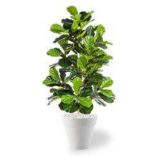 kunstplant Ficus lyrata in Pure Rond Small