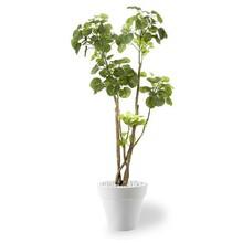 Kunstplant Polyscias in Pure Rond Small