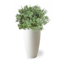Kunstplant Crossostephium in Pure Rond High