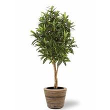 Kunstplant Wonderstruik in Rattan Pot