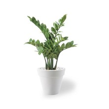 Kunstplant Zamioculcas in Pure Rond Small