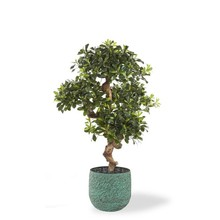 Kunstplant Pittosporum (bonsai) in Evi Pot