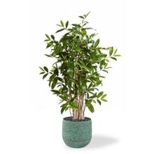 Kunstplant Dracaena in Evi Pot