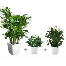 Plantenpakket Kamerplanten in Lechuza pot