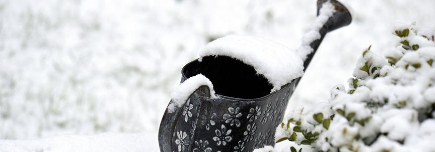Welke buitenplanten doorstaan de winter en welke moet u beschermen?