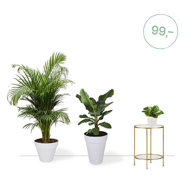 plantenpakket