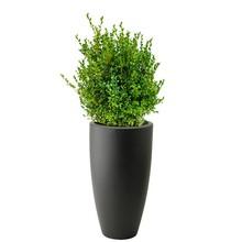 Elho Buxus Sempervirens In Pure Soft Antraciet