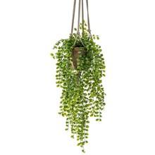 Ficus pumila  hang kunstplant