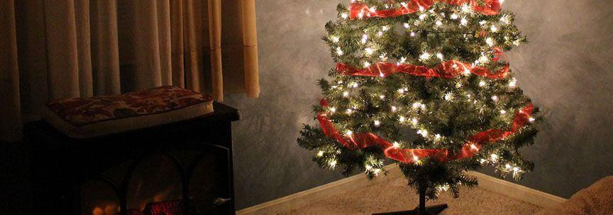 Vervang uw kerstboom door luchtzuiverende planten