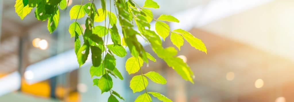 Waarom kantoorplanten onmisbaar zijn