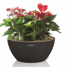 Lechuza Anthuriums in Zelfwatergevende Cubeto