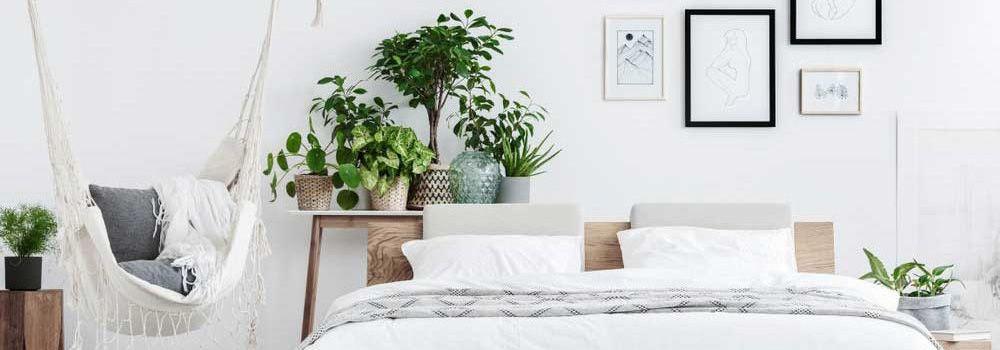 Planten in de slaapkamer: welke kies ik?