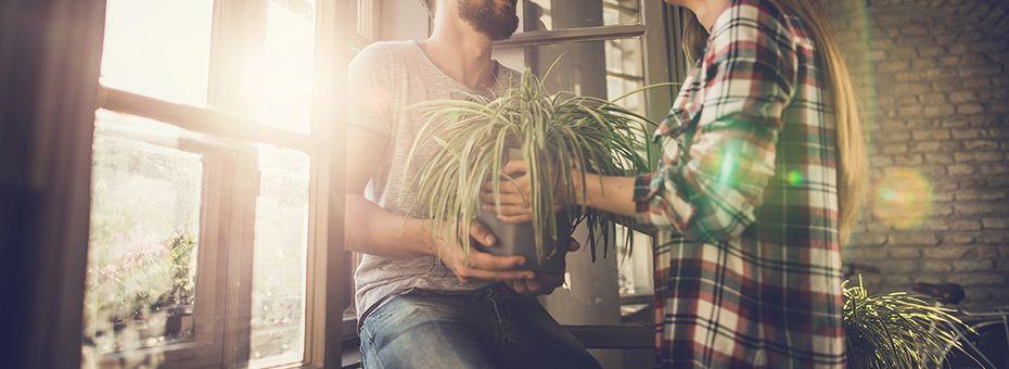 Vier Valentijnsdag met planten