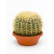 Echinocactus L