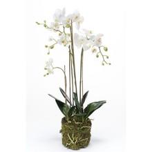 Orchidee wit kunstplant L