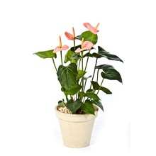 Anthurium roze kunstplant