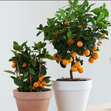 Exotische planten