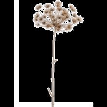 Heracleum bruin kunsttak