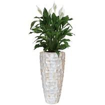Lepelplant in schelpenvaas wit hoog S