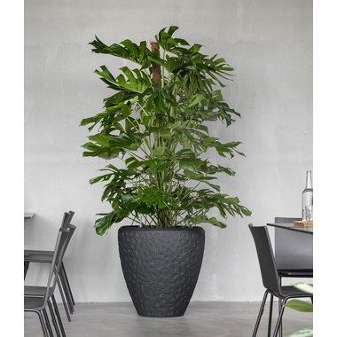 Grote kantoorplant in pot