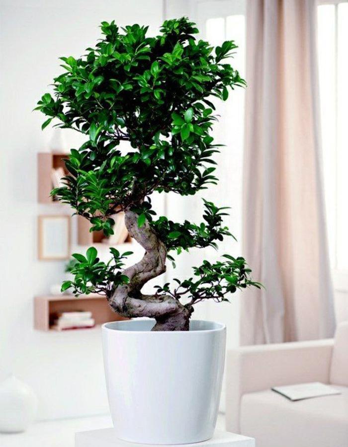 Bonsai Fleurdirect Nl Fleurdirect