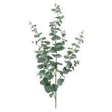 Eucalyptus kunsttak