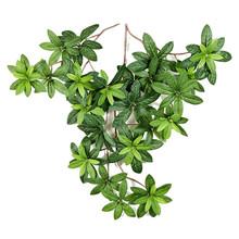 Azalea blad