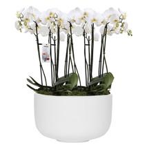 Elho Orchidee in witte schaal