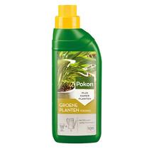 Aloe vera in Schelpen Pot Exclusive