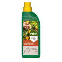 Sinaasappelboom M