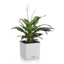 Lechuza Lechuza | Spathiphyllum