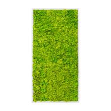Plantenschilderij XL