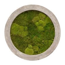 Plantenschilderij  Round Gray  Frame