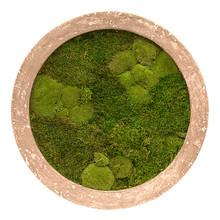 Plantenschilderij  Round Brown Frame