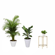 Plantenpakket  planten in Elho Urban