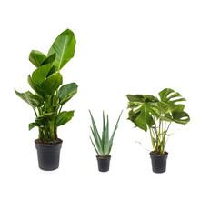 Lichte plaats plantenpakket