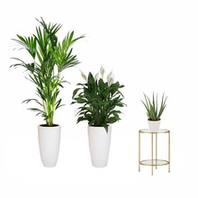 Plantenpakket Tropische planten in Elho pure soft