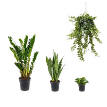 Makkelijk plantenpakket