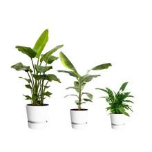 Elho Greenville M plantenpakket