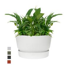 Elho Elho | Spathiphyllum