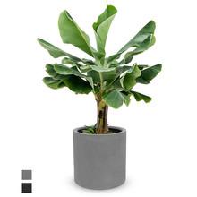 Fiberstone Bananenboom in Fiberstone Max