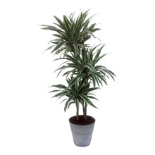 Artstone Dracaena White Stripe in Artstone pot
