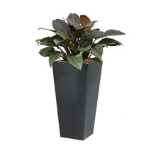 Philodendron in antraciete zelfwatergevende pot