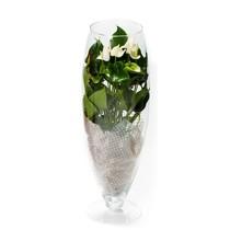 Anthurium White Champion in vaas (large)