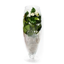 Anthurium White Champion in vaas (large)