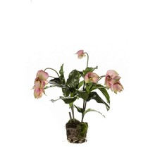 Medinilla Magnificus kunstplant