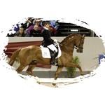 Sportprijzen paarden