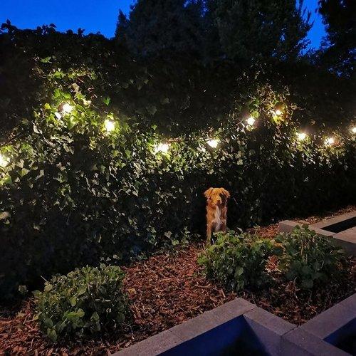 Illu Lichterkette, 1 Watt LED Filament Glühlampen, 5-100 Meter