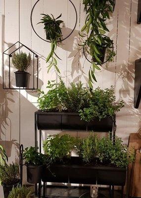 Planter Ian set