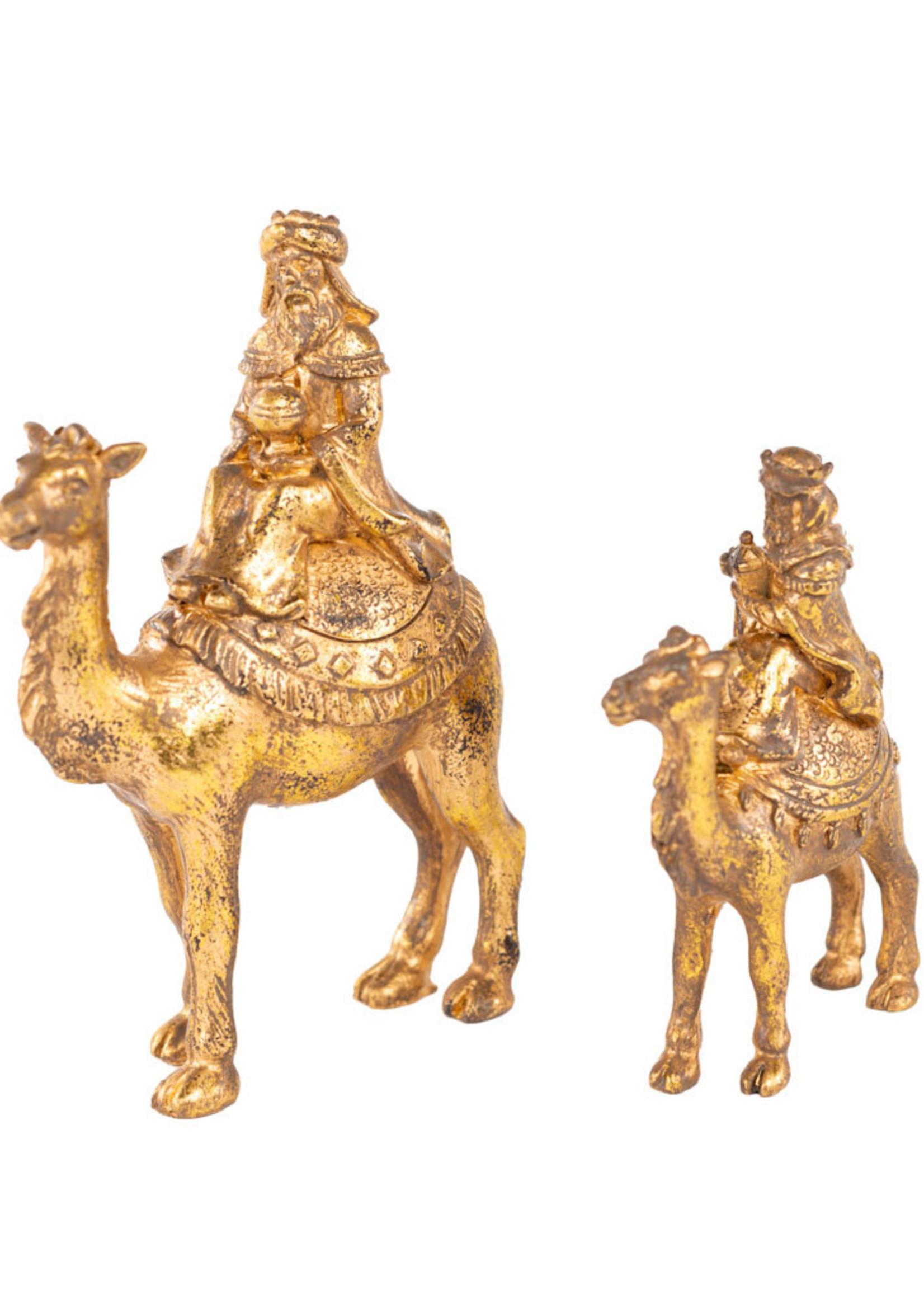 Camel Asti L